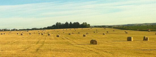 Alberta fields with hay bales