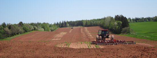 Charlottetown-Farm Field