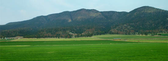 Lush fields in British Columbia's Fraser Valley