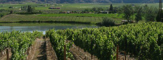 Vineyards near Oliver, BC