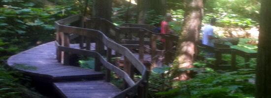 Skunk Cedars Trail in Reveslstoke National Park