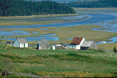 Cape Breton Farm