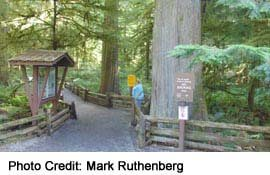 HUGE trees, protected in Cathedral Grove