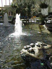 Turtles basking at the Devonian Gardens