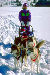 Dogsledding is the traditional way of getting around