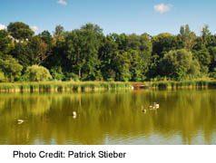 Pond at Eglinton Flats