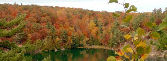 Fall trees around a lake