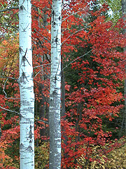Fall colours in Canada's forests