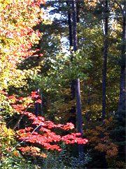 Fall scene in Gatineau