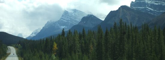 Forests in Yoho National park