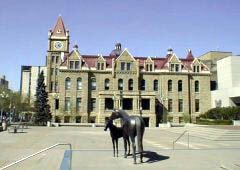 Horses in Municipal Plaza in front of the Old and New City halls