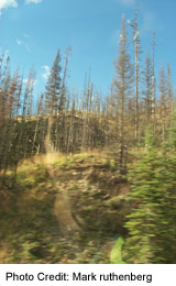 Forest Fires from 2004 leave their trace alongside the highway in several spots