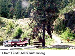 Bear Breek hiking trail