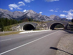 Animal bridges built over twinned sections of the Trans-Canada in Banff National Park