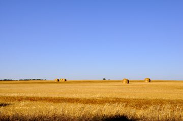 Wheatfields, west of Brandon
