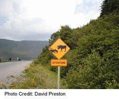 roadside Moose caution sign