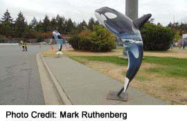 Killer Whale sculptures, at Duke Point Ferry Docks