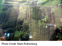 Aerial view of Orchards