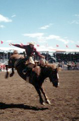 Saddlebronc Riding at the Stampede