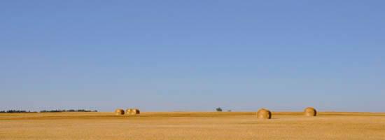 Wheatfield and Saskatchewan Skies