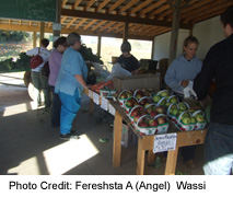 Hulshoff Farm Market
