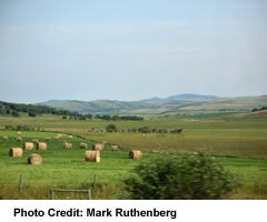 Rolled hay bales, near Jumping Pound Creek, West Of Calgary