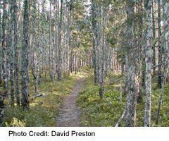 Terra Nova National Park-Malady Head trail