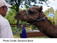 See the camel and hundreds of other animals at the Toronto Zoo