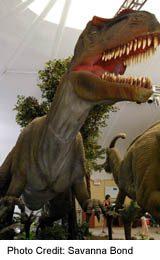 See a dinosaur at the Toronto Zoo