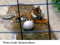 See the tiger and hundreds of other animals at the Toronto Zoo