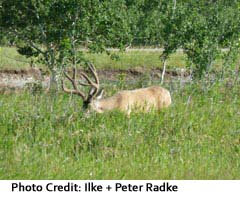 View of wildlife at Waterton Lakes