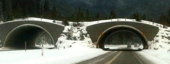 Banff National Park Animal Bridge