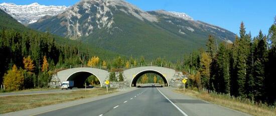 Banff Park Animal Bridges over Trans-Canada Highway