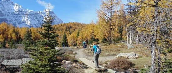 Larch Valley Trail, near Lake Louise
