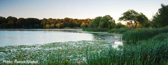 Grenadier Pond in Toronto's High Park