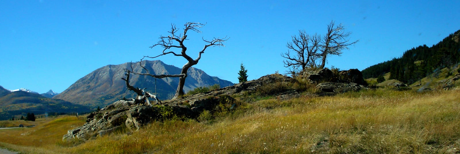 Crowsnest Pass-Burmis Tree-sliver