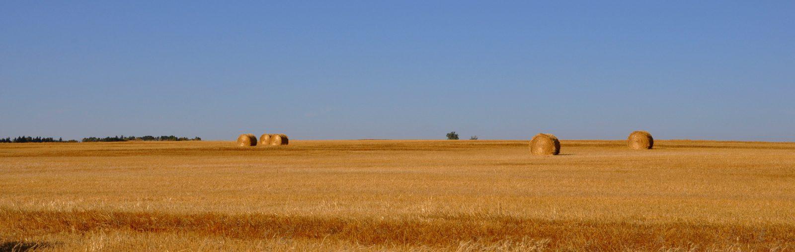 Saskatchewan Wheatfields sliver
